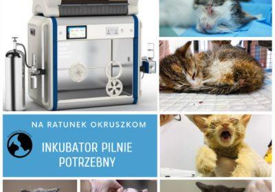 Mamy kolejne marzenie – fundacyjny inkubator