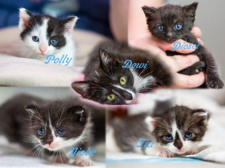 Dewi i jej dzieci: Polly, Diesel, Niobe i Tia