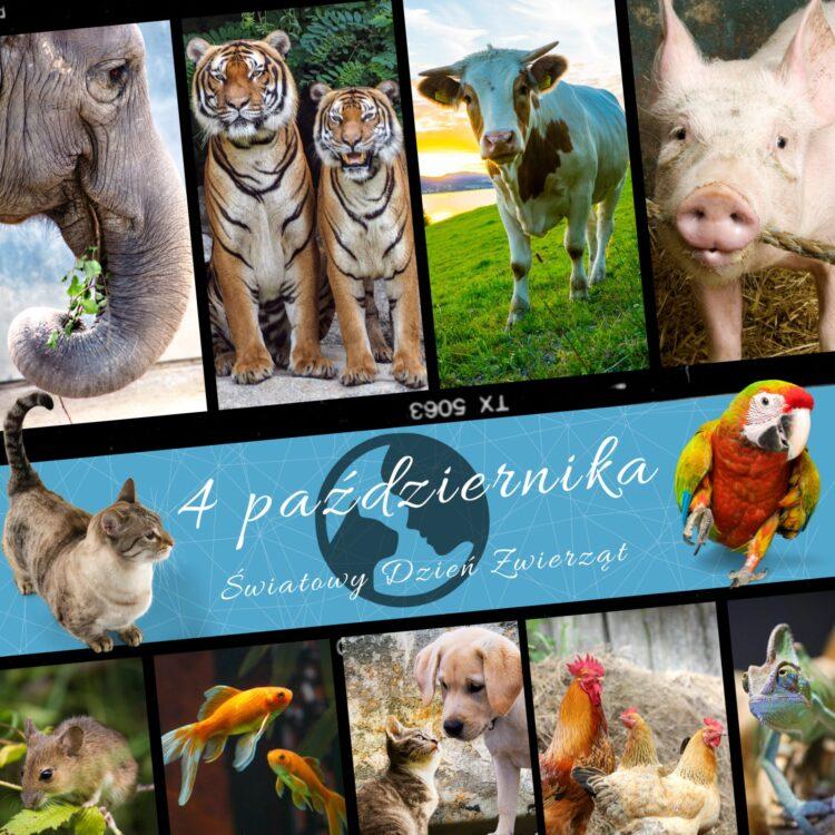 Światowy Dzień Zwierząt